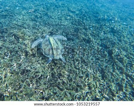 Shots For Thailand >> Underwater Shots Diving Thailand Stock Photo Edit Now 1053219557