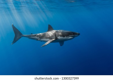 Underwater shots of one of the best creatures - sharks.