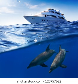 Underwater splitted by waterline template. Two bottlenose dolphins swimming under boat