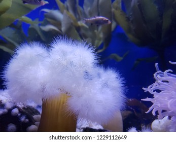 underwater textures,  soft tendrils with tubular body cohabitation with anemones and sea weed