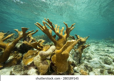 Underwater tropical coral reef in shallow water