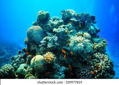 Underwater tropical sea view