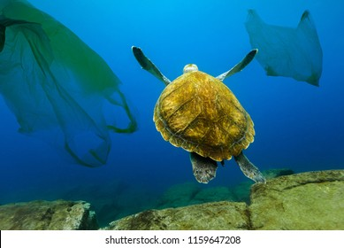 Underwater turtle floating among plastic bags. Concept of pollution of water environment.