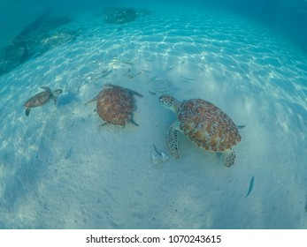 Underwater with turtles and  pelicans views around the small Caribbean island of Curacao