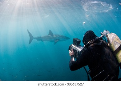 A underwater videographer filming a great white shark in open water with clear light rays penetrating the water.