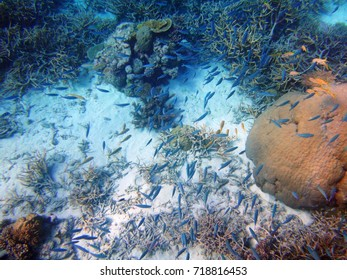 Underwater view of colorful coral and sealife in the Great Barrier Reef, Coral Sea, Australia