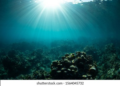 Underwater view with corals, rocks and sun rays. Tropical sea and reef