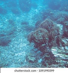 Underwater view on the coral reef and tropical underwater world. Diving and snorkeling in the tropical sea.Travel concept. Adventure concept