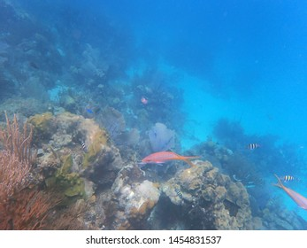 underwater view of pink and stripy fish, in the reef