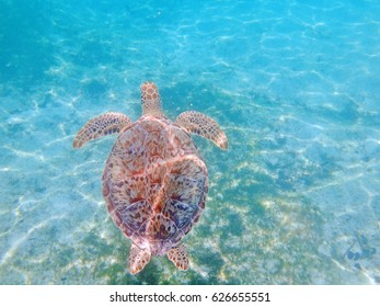 Underwater view of a sea turtle swimming in the Caribbean Sea