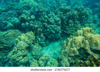Underwater view with wonderful and beautiful corals at Rok island, Trang Thailand