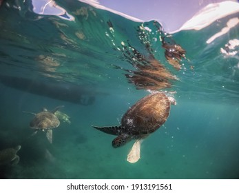 Underwater Views around the Caribbean island of Curacao