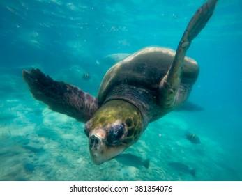 Underwater Views - Views around the Caribbean island of Curacao