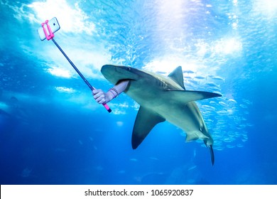 Underwater white shark taking a selfie picture with a human arm holding a selfie stick. Undersea marine funny background.