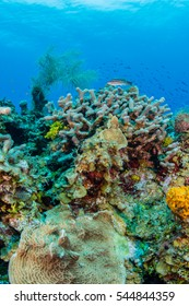 underwater wide angle of a colorful coral reef with clear blue caribbean water