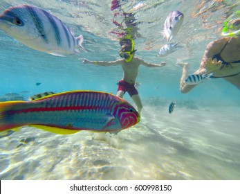 Underwater world with boy dives swimming with colorful fishes