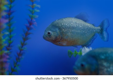 The underwater world. Bright Exotic Tropical coral fish in the Red Sea artificial environment of the aquarium with corals and algae aquatic plants