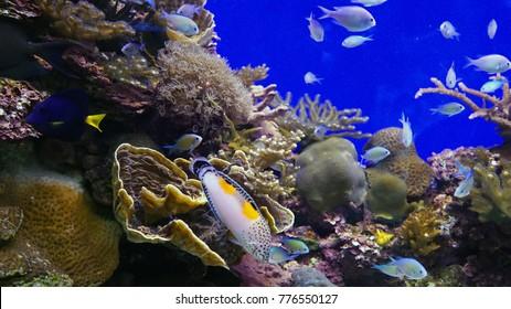 Underwater world of carol