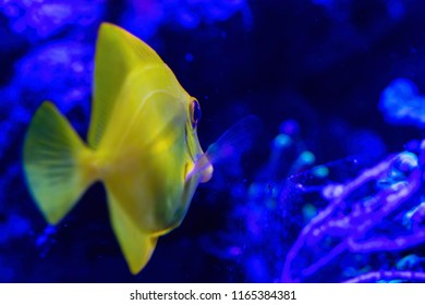 the underwater world closeup and one yellow small fish with big eyes