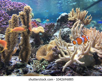 underwater world with coral