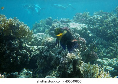 underwater world of coral and fishes