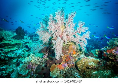 Underwater World. Coral reef in Wakatobi National Park near Sulawesi island . Indonesia