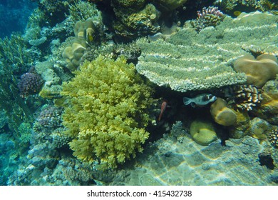 underwater world of corals and fishes