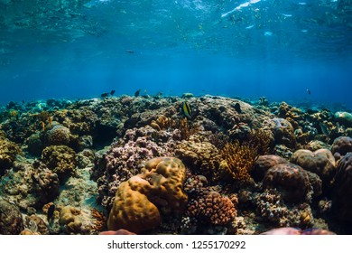Underwater world with corals and tropical fish in blue sea. Menjangan island