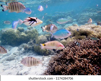 Underwater world with corals and tropical fishes. Snorkeling in Guam, Mariana Islands, USA