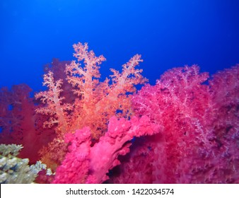 Underwater world in deep water in coral reef and plants flowers flora in blue world marine wildlife, travel nature beauty exploration in diving trip,adventures recreation dive. Fish, corals,creatures