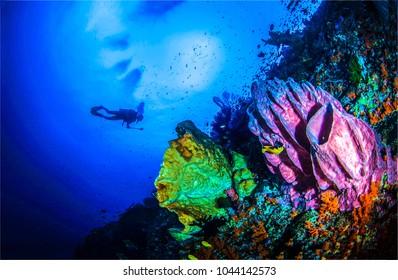 Underwater world diving landscape