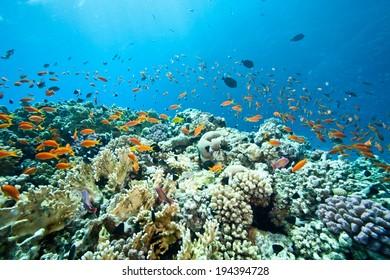 Underwater world in Egypt.