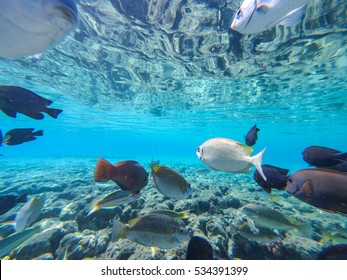 Underwater world with fish and coral reef