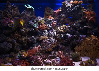 Underwater world and its inhabitants in artificial aquarium conditions