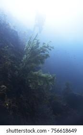 Underwater world in Jeju Island