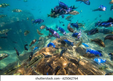 Underwater world of Lake Malawi - Malawi