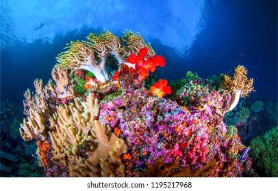 Underwater world landscape. Beautiful underwater world coral view. Underwater world coral landscape. Underwater world panorama