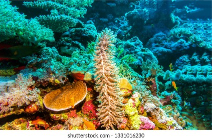 Underwater world landscape. Beautiful underwater world scene. Underwater life landscape. Underwater world view