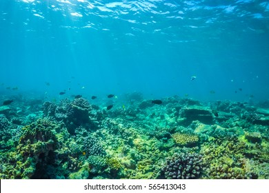 Underwater world landscape, colorful coral reef and blue clear water with sunlight and sunbeam. Maldives underwater wildlife, marine life, adventure snorkeling.
