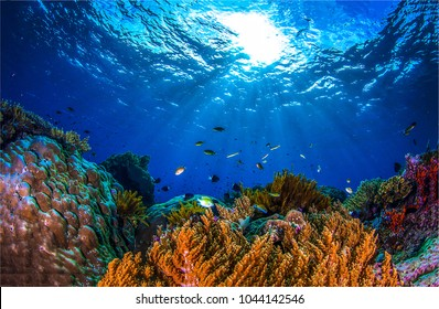 Underwater world landscape. Underwater world coral fishes of Red sea Egypt. Underwater life scene. Beautiful underwater world view
