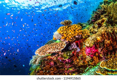 Underwater world landscape. Underwater world coral fishes of Red sea scene. Underwater world coral fish shoal view. Underwater world panorama