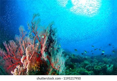 Underwater world landscape. Underwater world coral fishes of Red sea panorama. Underwater world coral fish shoal landscape. Underwater coral fishes view