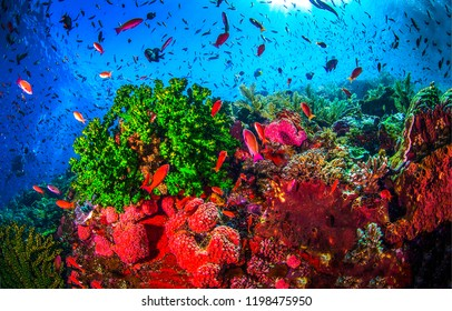 Underwater world landscape. Coral fishes underwater scene. Underwater life panorama. Underwater world coral fishes landscape