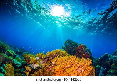 Underwater world landscape. Coral reef underwater view