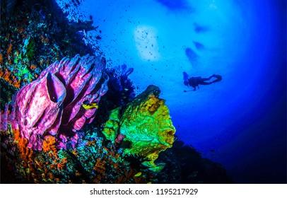 Underwater world landscape. Diving underwater scene. Underwater sea sponge view. Underwater diver silhouette