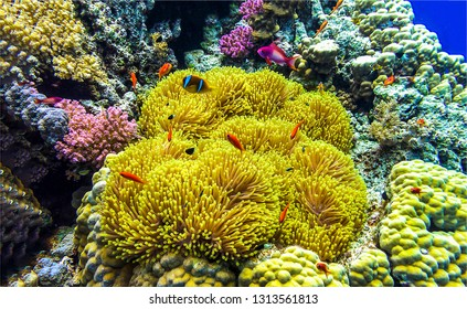 Underwater world landscape. Underwater life view. Underwater macro world view. Underwater coral fishes