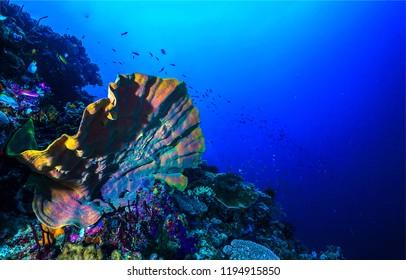 Underwater world landscape. Sea sponge underwater scene. Underwater sea sponge view. Underwater world landscape