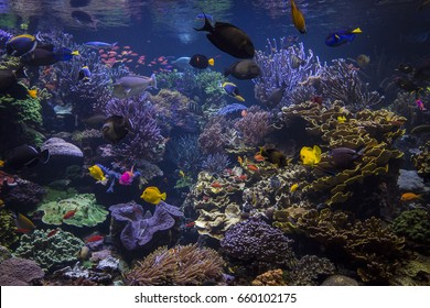 Underwater world. Underwater life landscape.