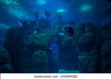 Underwater world in Lisbon Portugal