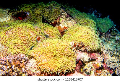 Underwater world macro view. Macro world underwater scene. Macro world life underwater view